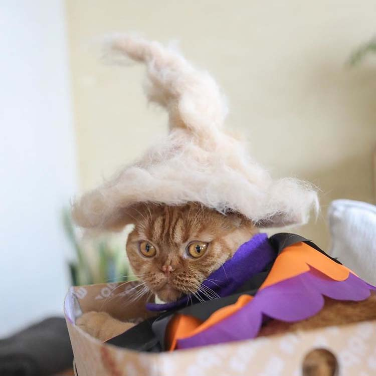 cats-in-hats-made-from-their-own-hair-vinegret-12