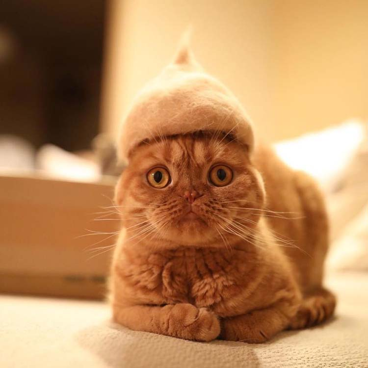 cats-in-hats-made-from-their-own-hair-vinegret-2