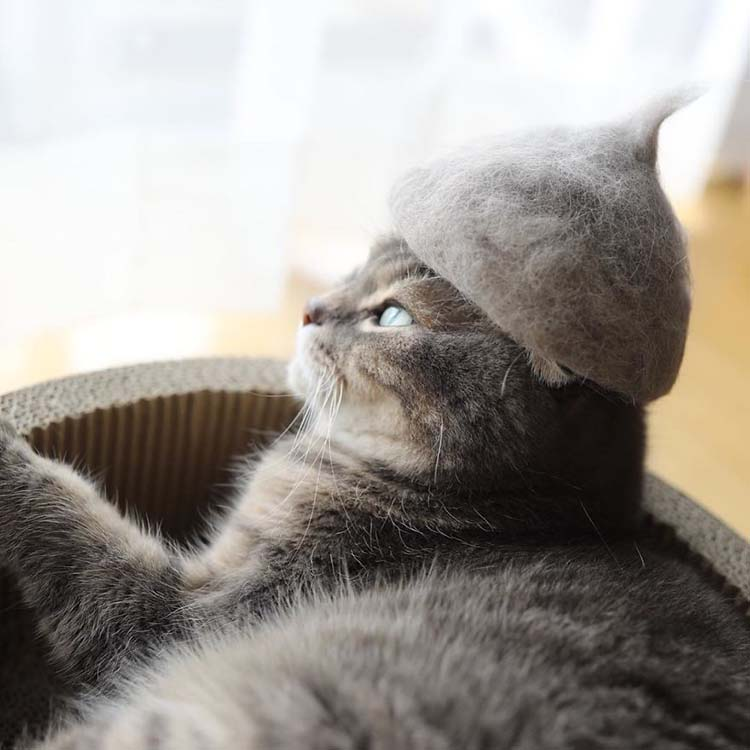 cats-in-hats-made-from-their-own-hair-vinegret-3