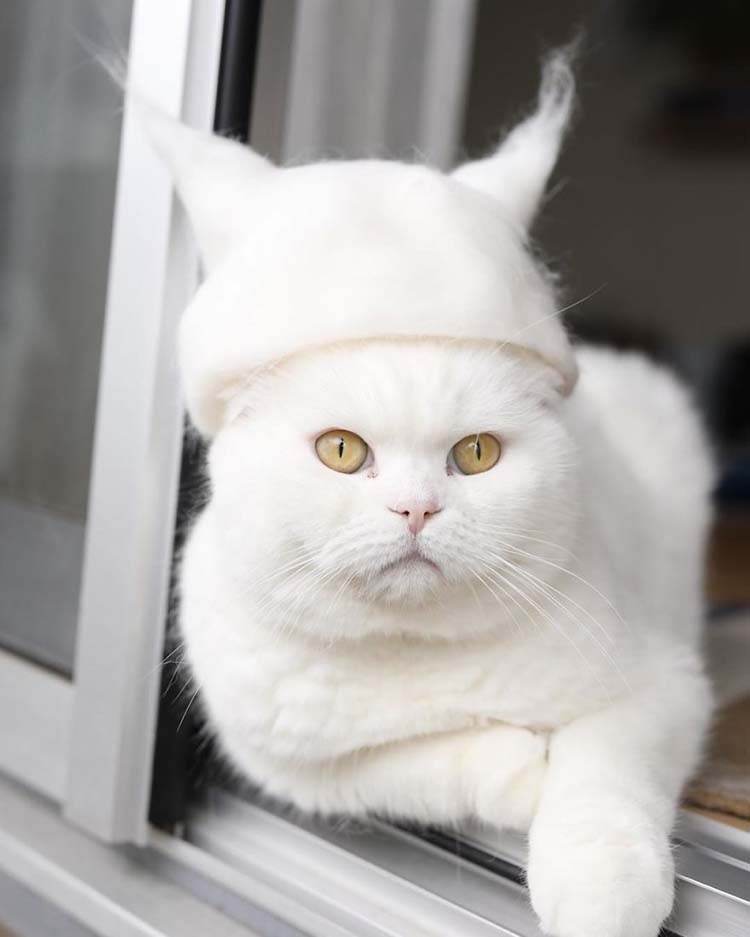 cats-in-hats-made-from-their-own-hair-vinegret-4