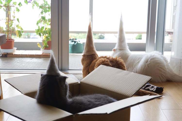 cats-in-hats-made-from-their-own-hair-vinegret-5