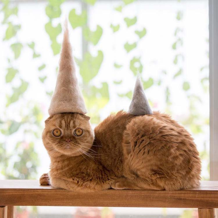 cats-in-hats-made-from-their-own-hair-vinegret-6