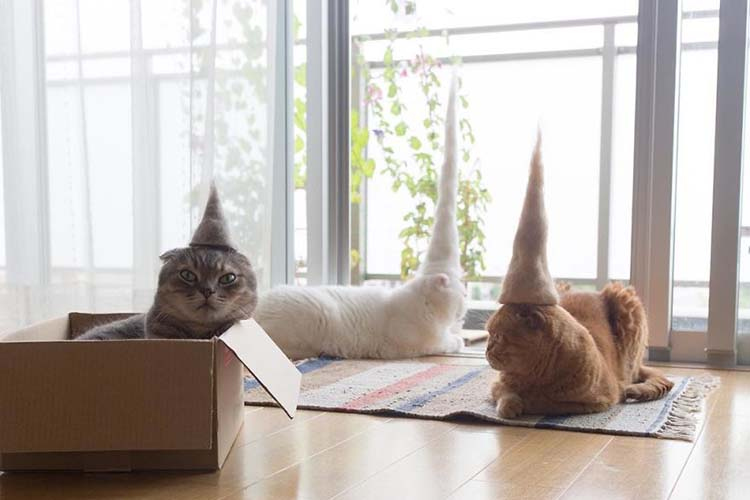 cats-in-hats-made-from-their-own-hair-vinegret-7