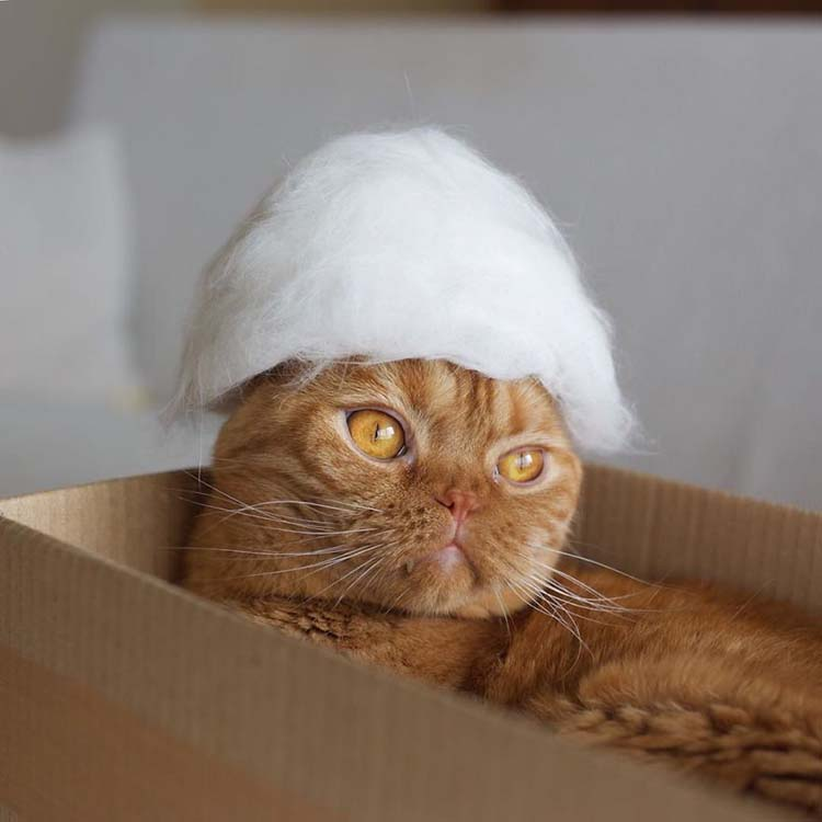 cats-in-hats-made-from-their-own-hair-vinegret-8