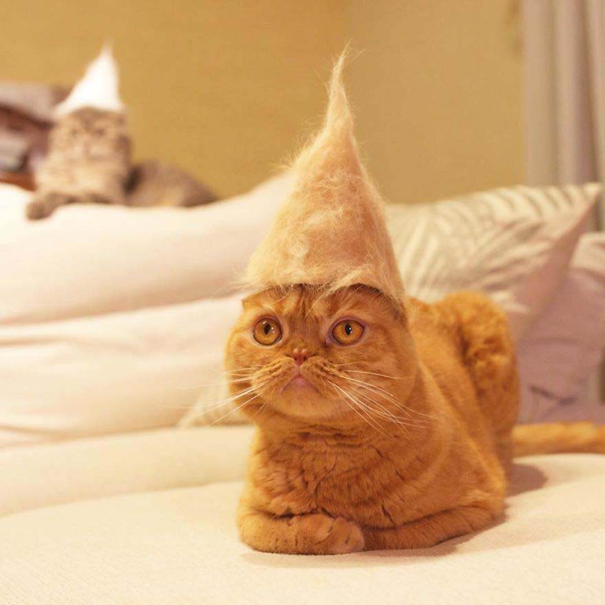 cats-in-hats-made-from-their-own-hair-vinegret-9