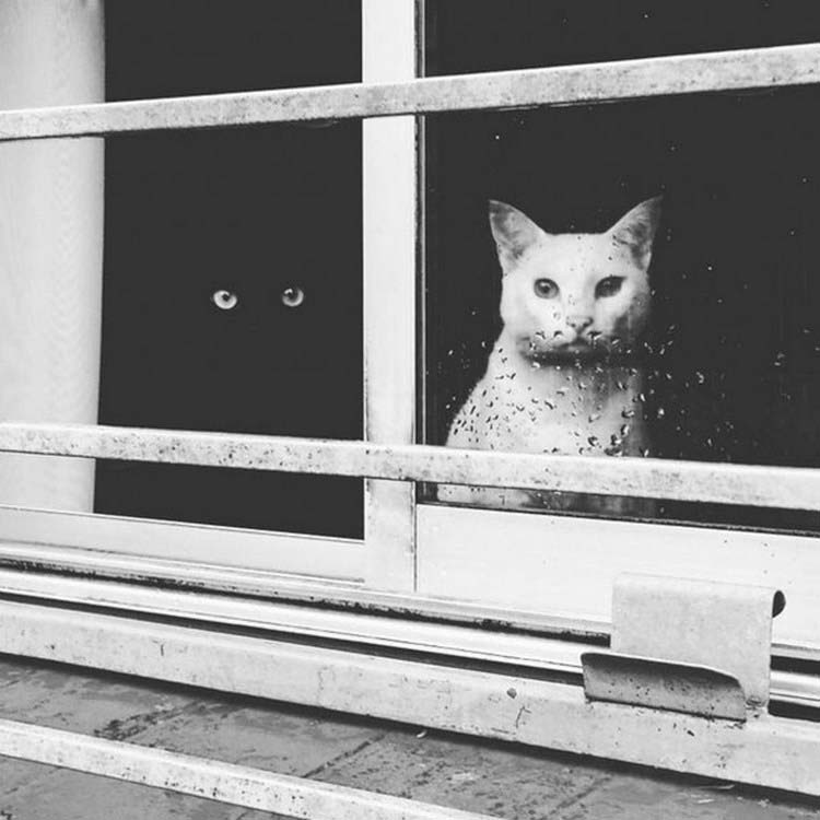 black-white-cats-yin-yang-vinegret-1