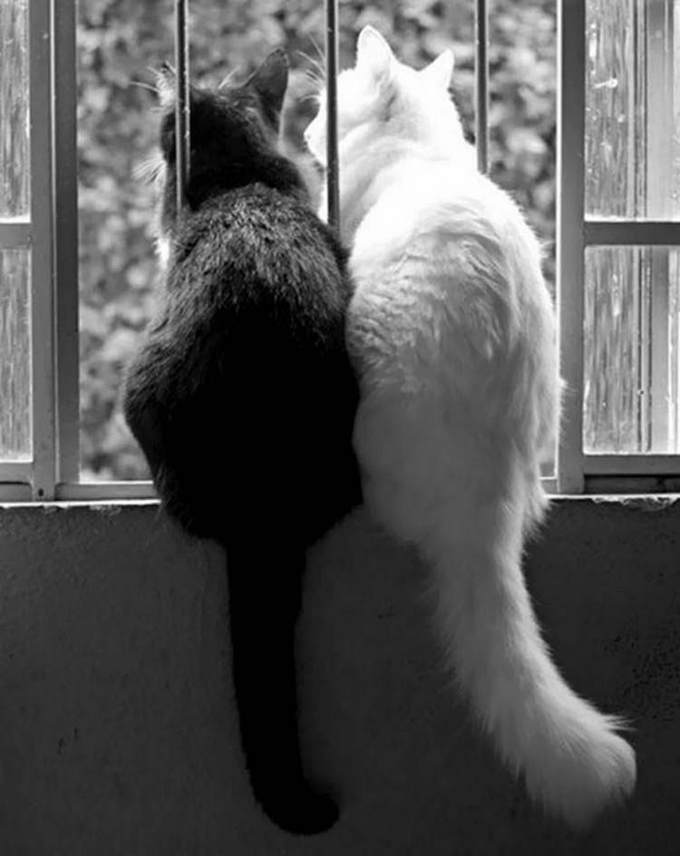 black-white-cats-yin-yang-vinegret-10