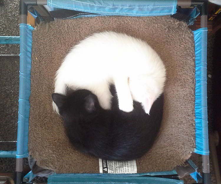 black-white-cats-yin-yang-vinegret-17
