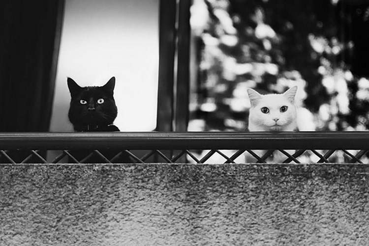 black-white-cats-yin-yang-vinegret-4
