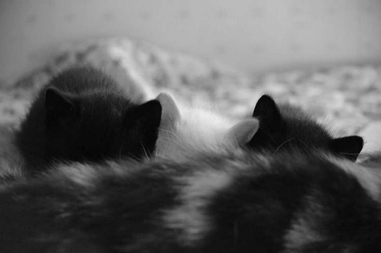 black-white-cats-yin-yang-vinegret-5