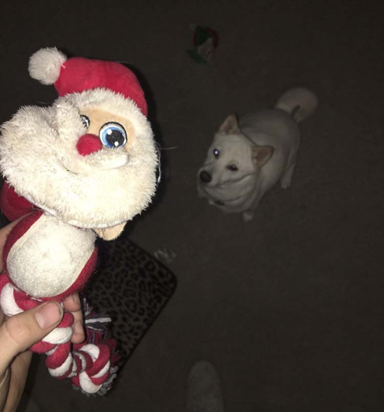 dog-toy-santa-mall-picture-kya-vinegret-1