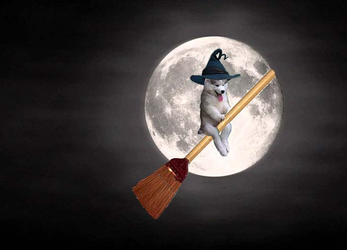husky-tree-photoshop-battle-vinegret-11
