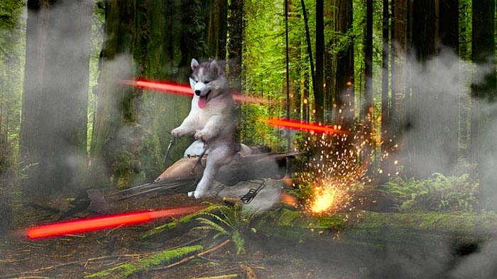 husky-tree-photoshop-battle-vinegret-4