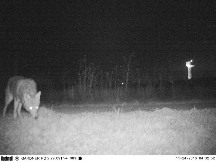police-camera-find-mountain-lion-kansas-vinegret-10