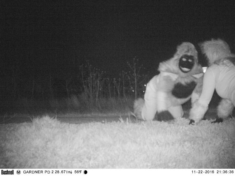 police-camera-find-mountain-lion-kansas-vinegret-4