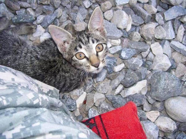 soldier-refuses-leaving-special-needs-kitten-afghanistan-vinegret-3