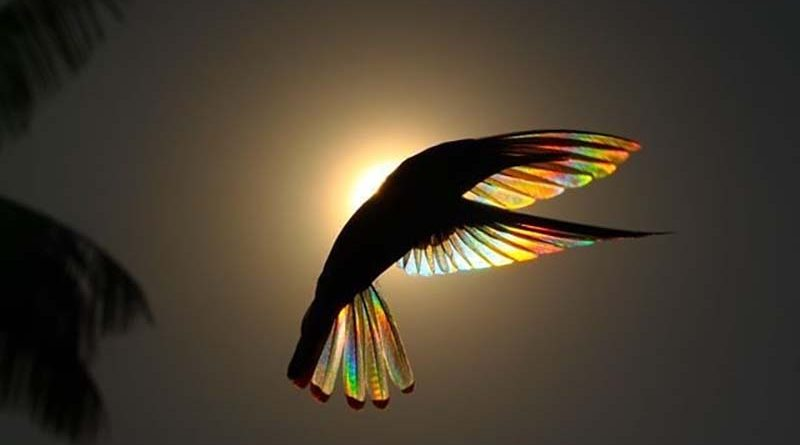 https://vinegred.ru/wp-content/uploads/2019/07/hummingbird-wings-rainbow-christian-spencer-vinegret-2-800x445.jpg