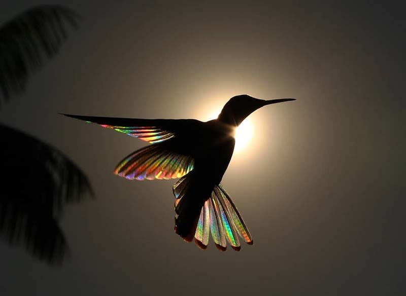 https://vinegred.ru/wp-content/uploads/2019/07/hummingbird-wings-rainbow-christian-spencer-vinegret-5.jpg