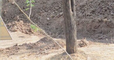 https://vinegred.ru